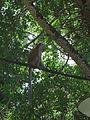 Penang Botanic Gardens (9).JPG
