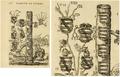 Petra Sancta Symbolis heroicis - Carafa családfa XXII. lap.PNG