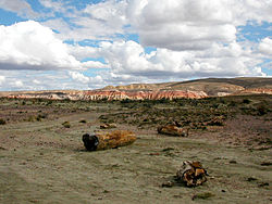In the petrified forest