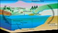 Phosphorus cycle.png
