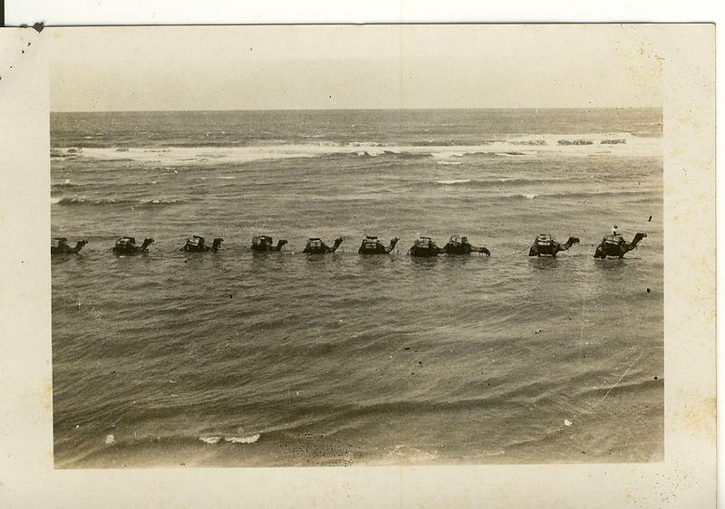שיירת גמלים בחוף תל אביב בשנות ה-30
