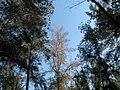PikiWiki Israel 7083 Ben-Shemen Forest.JPG