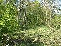 Pincushion Plantation - geograph.org.uk - 459547.jpg