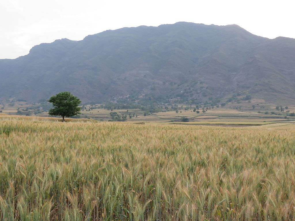 KPK Photo: File:Pinjanrh 2, Dheri Alladhand, Village Near River Swat