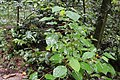 Plant diversity of Lawachara National Park.jpg