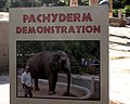 Please Demo Pachyderm (2813286944).jpg