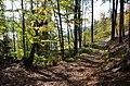 Poertschach Bannwaldweg im Herbst 20102013 644.jpg