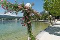Poertschach Johannes-Brahms-Promenade Kletterrosen 06062015 4525.jpg