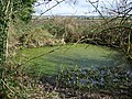 Pond near Chettle - geograph.org.uk - 1182926.jpg