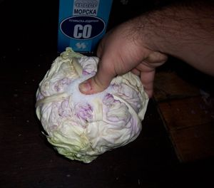 Whole sour cabbage - Image: Pressing salt into cabbage