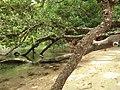Puerto Princesa, Palawan, Philippines - panoramio (29).jpg
