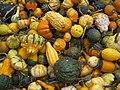Pumpkins 5151379537.jpg