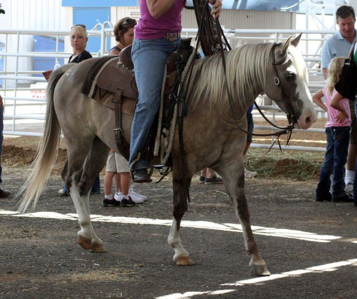 File:Quarter Horse Pony.jpg