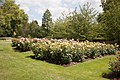 Queen Mary's Garden IMG 4417.jpg