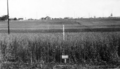 Queensland State Archives 4112 Wheat experiment test plots Yeerongpilly November 1928.png