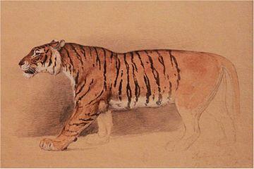 Raden Saleh - Study of walking tiger