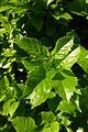 Ramat Gan Leaves 12 2015 (8).JPG