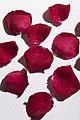 Red Rose Petals (4386388455).jpg