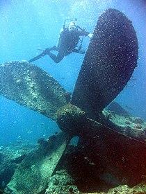 Reef3661 - Flickr - NOAA Photo Library.jpg
