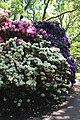 Rhododendronpark Bremen 20090513 247.JPG