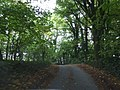 Road through Clerks Patch wood - geograph.org.uk - 1541266.jpg
