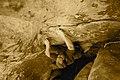 Rock climber Dennis George.JPG