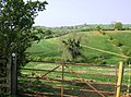 Rolling countryside west of Shenington - geograph.org.uk - 448998.jpg