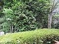 Rozan-ji Odoi 003.jpg