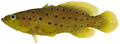 Rypticus subbifrenatus - pone.0010676.g059.png