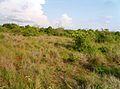 Sahamalaza National Park.jpg