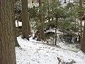 Salt Springs State Park (3284695782).jpg