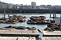 San Francisco Pier 39 Sea Lions (178805167).jpg