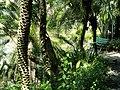 San Juan Botanical Garden - DSC07004.JPG