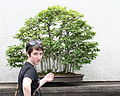 Sarah and a bonsai, 2011-05-29.jpg