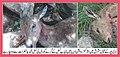 Save wildlife save Pakistan.jpg