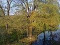 Schepec river - panoramio.jpg