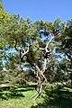 Schleswig-Holstein, Bark, Naturschutzgebiet 30 NIK 4216.JPG
