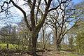 Schleswig-Holstein, Drage, Naturdenkmal 13 NIK 2040.JPG