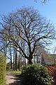 Schleswig-Holstein, Tornesch, Naturdenkmal 12-09 NIK 2247.JPG