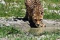 Schmieding Gepard-0217.jpg