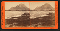 Sea Lions, West End, Farallon Islands, Pacific Ocean, by Watkins, Carleton E., 1829-1916.png