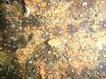 Sea cucumbers at the Pietermaritzburg P7260773.JPG