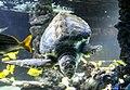 Sea turtle Monaco.jpg