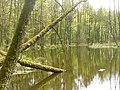 Selchower See - Naturschutzgebiet (Selchow Lake - Nature Reserve) - geo.hlipp.de - 35794.jpg