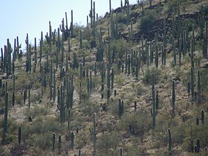 Sentinel Peak (Arizona) - Image: Sentinel Peak Tucson Arizona
