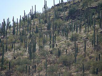 Sentinel Peak (Arizona) - Image: Sentinel Peak Tucson Arizona