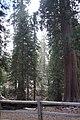 Sequoya National forest Giant Forest en2016 (16).JPG