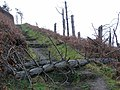Shattered treescape above Clarach Bay - geograph.org.uk - 1166656.jpg
