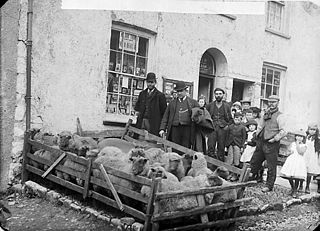 Sheep mart, Narberth