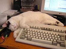 Sheila the PC cat.jpg